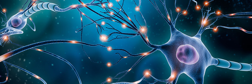 Electrophysiology and Neuronal Network Dynamics