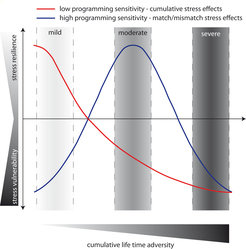 <p><strong>Effects of different degrees of life time adversity on stress vulnerability and resilience in adulthood in dependence of genetic predisposition.</strong></p> <p>An individual with a lower sensitivity to its early environment (red line) would therefore benefit most from life histories with a mild overall adversity, while each experienced adverse life event would increase subsequent stress vulnerability and disease probability (e.a. cumulative stress hypothesis). On the other hand, an individual with a high sensitivity to environmental stimuli would adapt its physiology to this kind of environment (match/mismatch hypothesis). Here, a moderate life time adversity would be most beneficial, as this would increase the resilience to subsequent mild or moderate stressors. Exposure to severe adversity would in all cases increase stress vulnerability and disease risk. Our data indicate that such different patterns (red vs. blue) might be a result of different genetic polymorphisms, where one allele favours low sensitivity (red), while the other allele favours a high sensitivity (blue). Therefore, each genotype can have beneficial as well as detrimental effects on stress vulnerability and stress-related disorders, depending on the degree of cumulative life time adversity.</p>