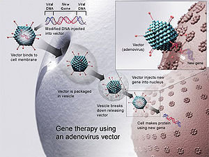 Mode of action of a viral vector used for gene therapy.
